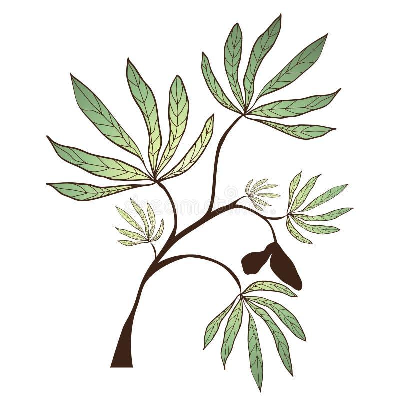 木棉树分支 向量例证