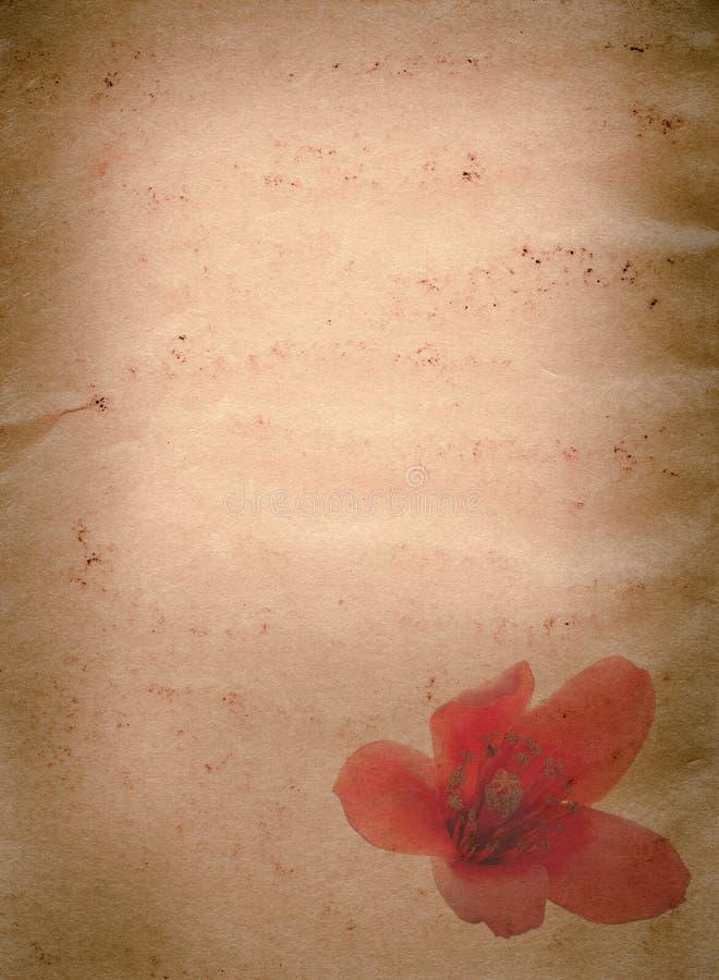 木棉树木棉红色花老grunge 免版税图库摄影