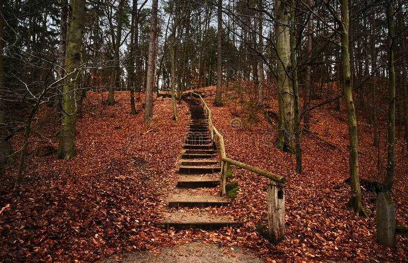 木楼梯向上带领在隆重从秋叶小山入森林,与拷贝空间的风景 图库摄影