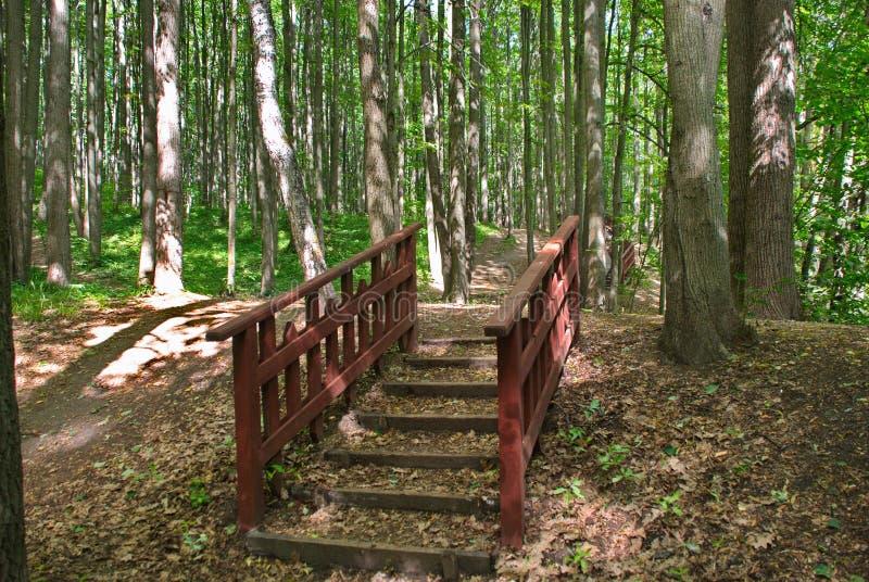 木楼梯在一个美丽的绿色森林里 免版税库存照片