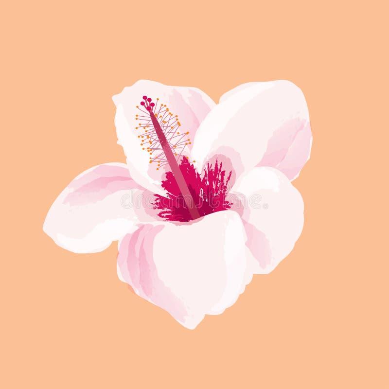 木槿花例证 热带异乎寻常的夏威夷植物隔绝了 库存例证