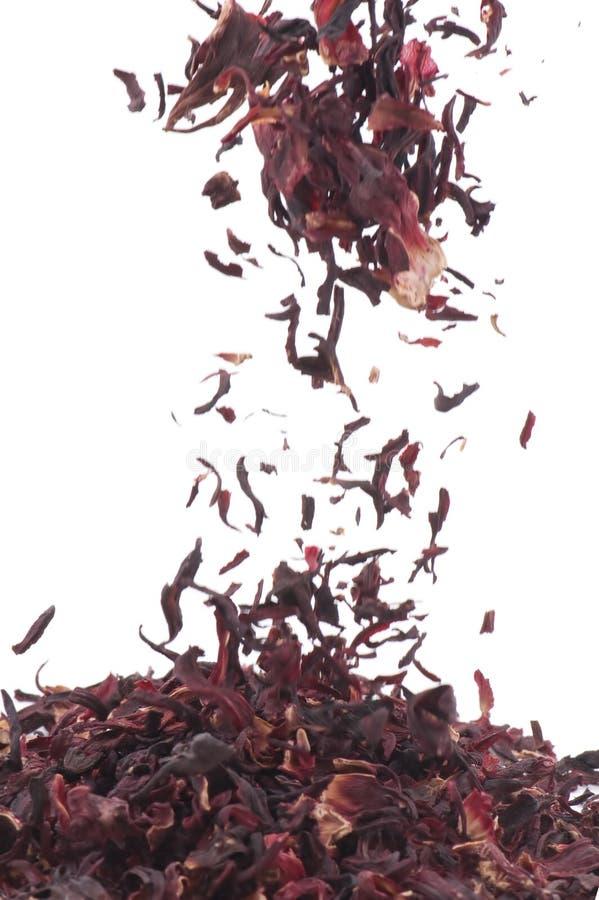 木槿茶 免版税库存照片