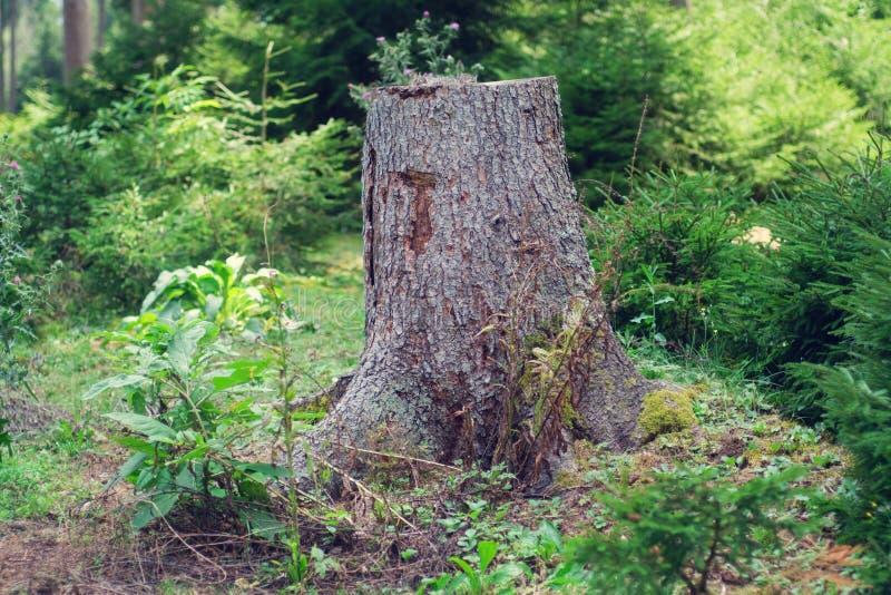 木残余部分 图库摄影