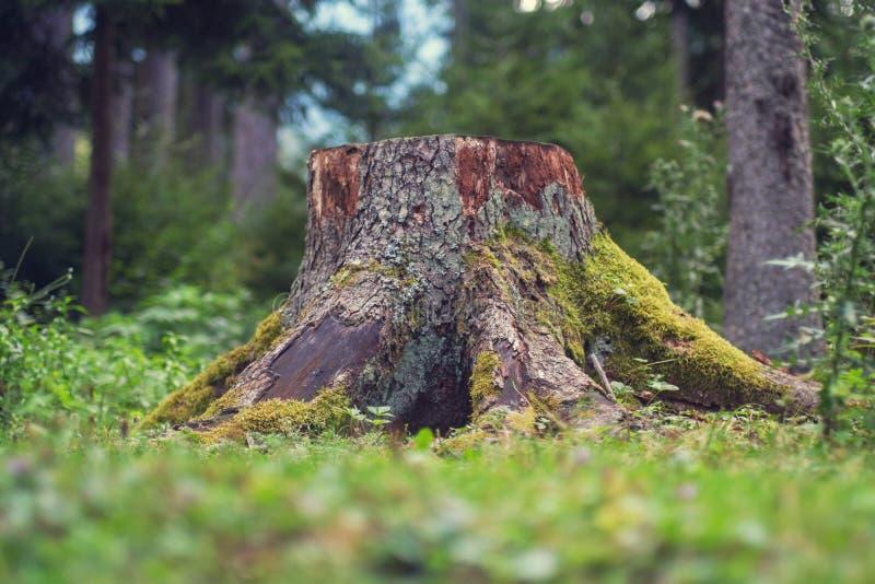 木残余部分 库存图片
