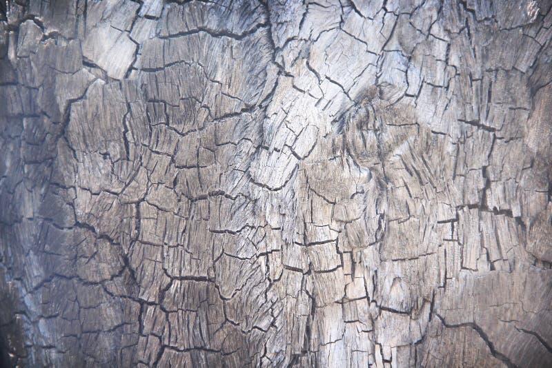 木炭抽象背景或被烧的树干纹理与破裂的样式 免版税库存照片