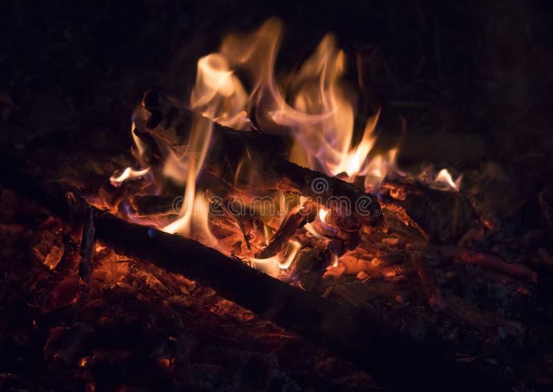 木燃烧特写镜头在篝火的 免版税库存图片