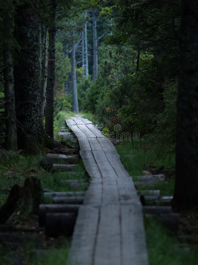 木的方式 免版税库存照片