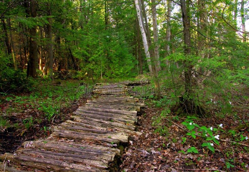 木的木板走道 库存图片