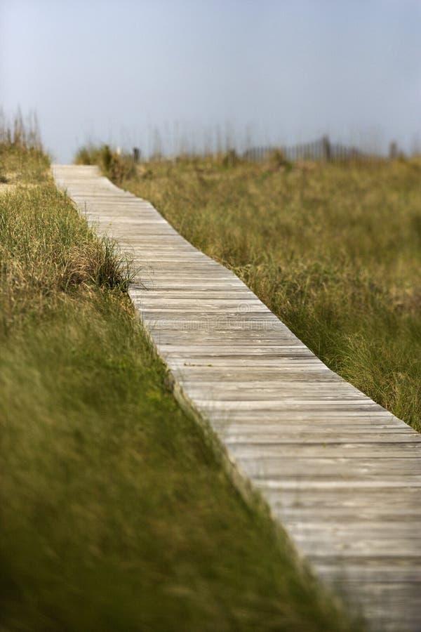 木的海滩木板走道 库存图片