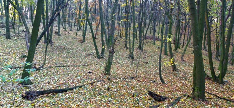木的秋天色 库存照片