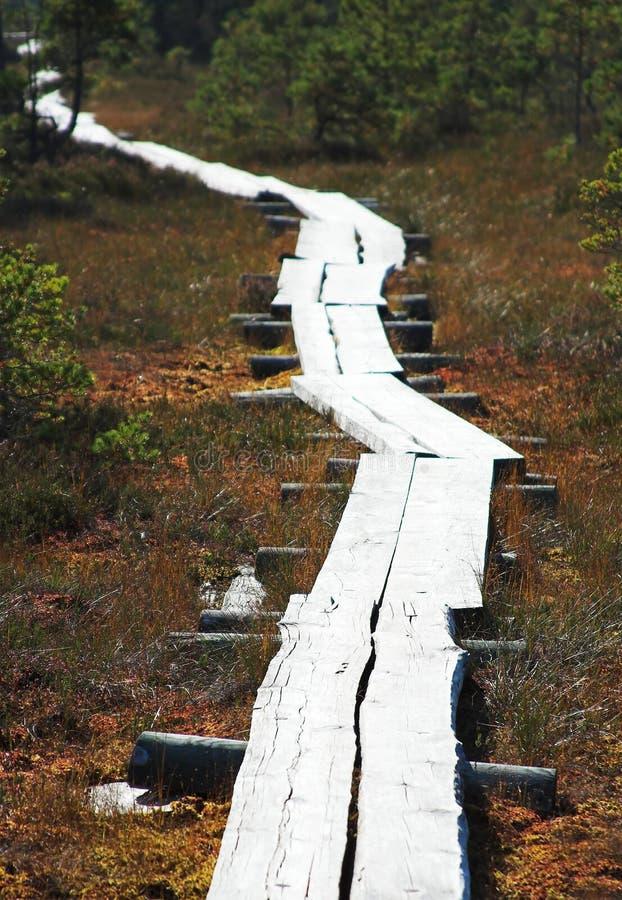 木的路径 免版税库存照片
