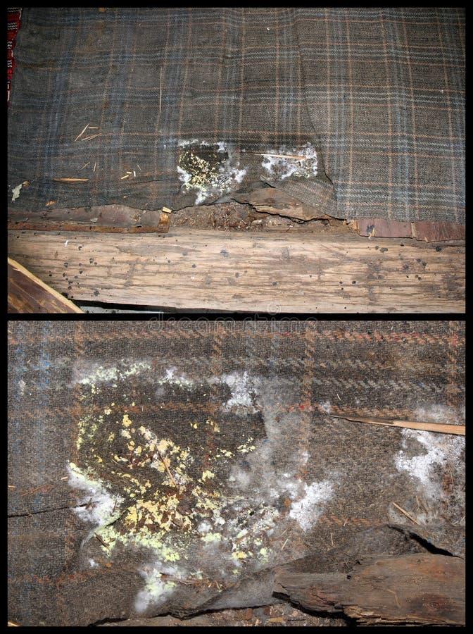 木真菌细节  免版税库存照片