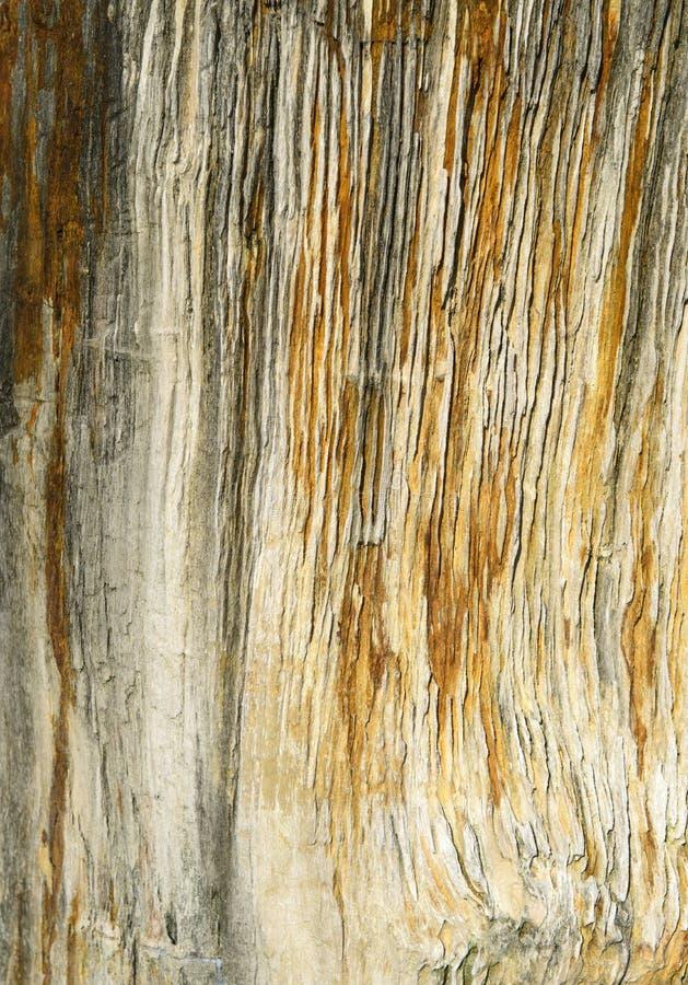木石化一个古老片断在黑色的与黄线 库存照片