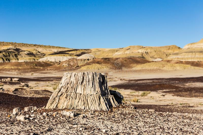 木石化,树桩在沙漠,气候变化,全球性变暖 免版税库存图片