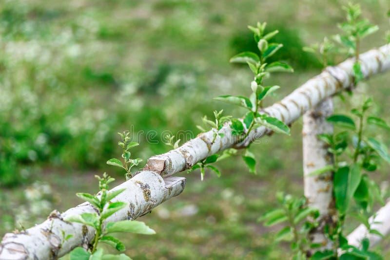 木篱芭、绿色领域、树桩和郊区lif的概念 免版税库存图片