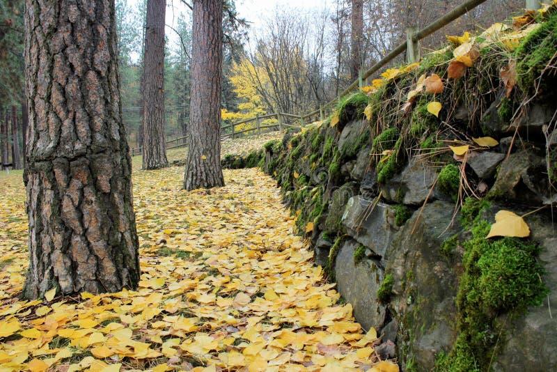 木篱芭和岩石墙壁在有秋天黄色叶子的森林里 免版税库存图片