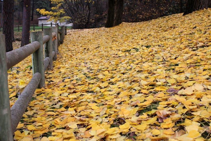 木篱芭在有秋天黄色叶子的森林里 免版税库存照片