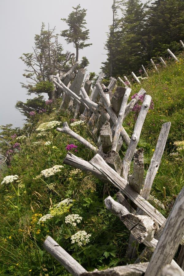 木篱芭在瑞士阿尔卑斯 免版税库存图片