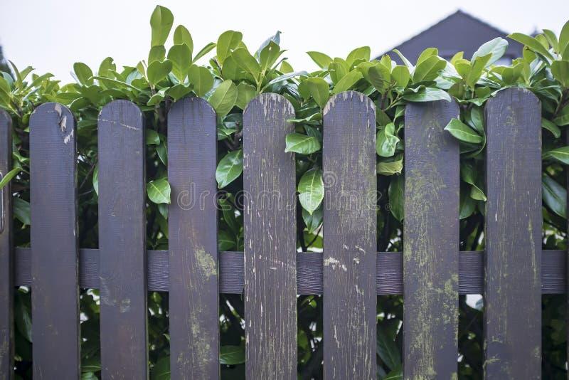 木篱芭有剥的油漆和在它后绿色灌木树篱在围场 库存图片