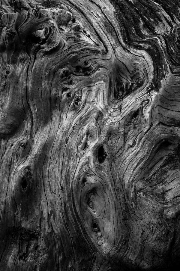 木纹理和形状 库存图片
