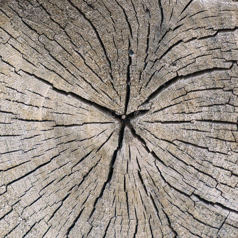 木纹理和镇压 免版税库存图片
