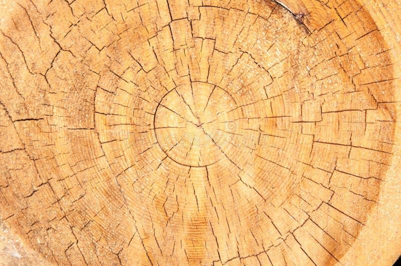 木纹理在横断面 免版税库存照片