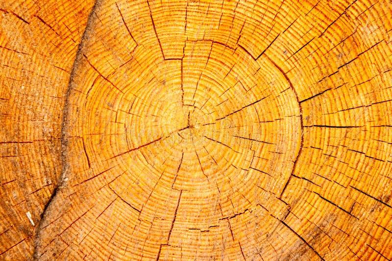 木纹理在横断面 免版税库存图片