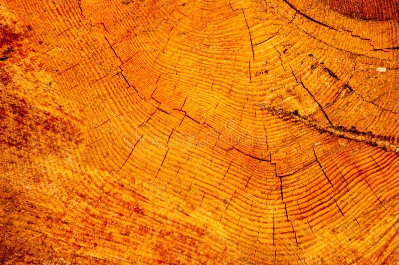木纹理在横断面 图库摄影