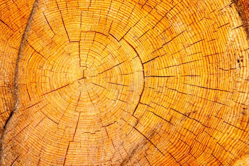 木纹理在横断面 库存照片