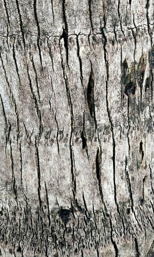 木纹理板条五谷背景、木书桌桌或者地板 老生锈的木头 葡萄酒木纹理 库存照片