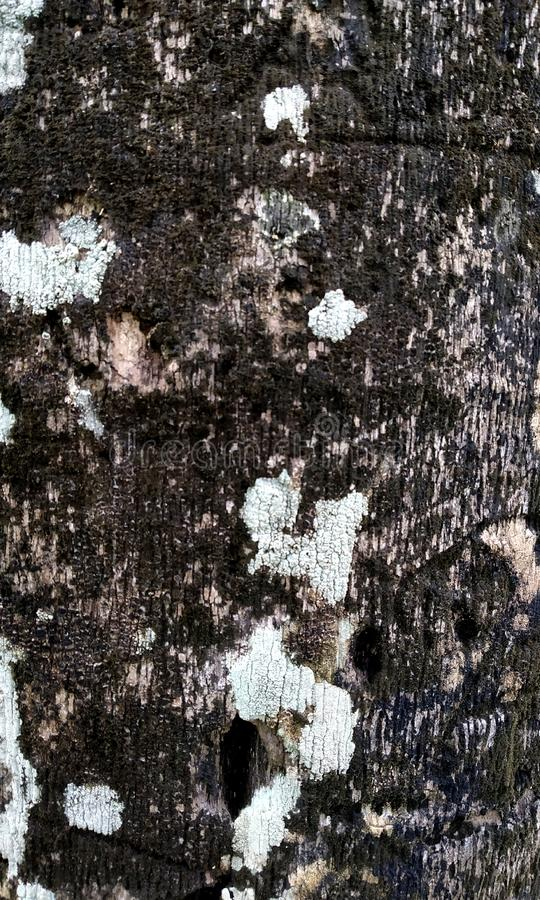木纹理板条五谷背景、木书桌桌或者地板 老生锈的木头 葡萄酒木纹理 免版税库存照片