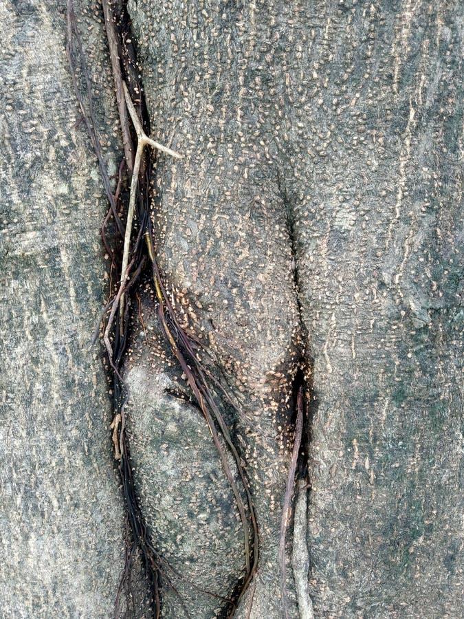 木纹理板条五谷背景、木书桌桌或者地板 老生锈的木头 葡萄酒木纹理 免版税库存图片