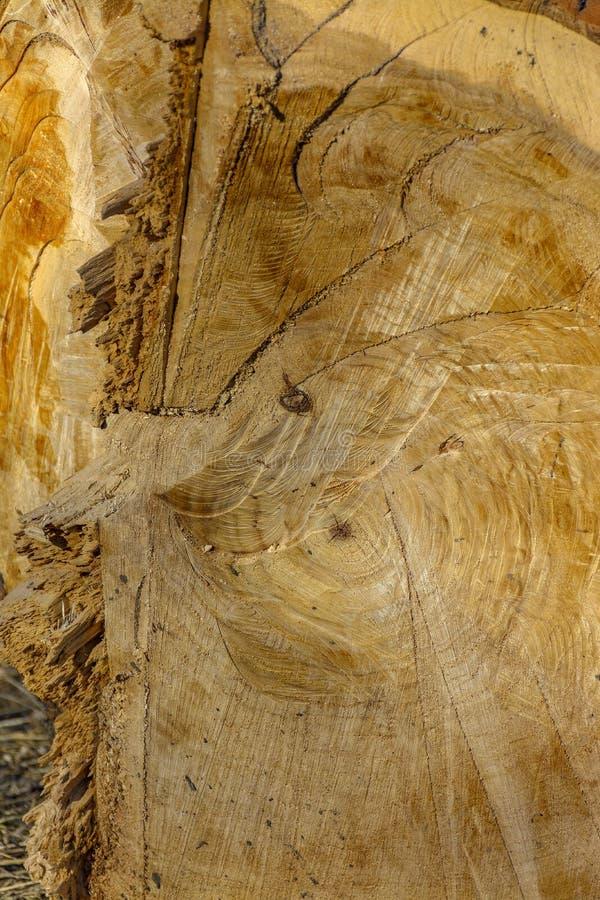 木纹理 新近地被锯的木头 库存照片