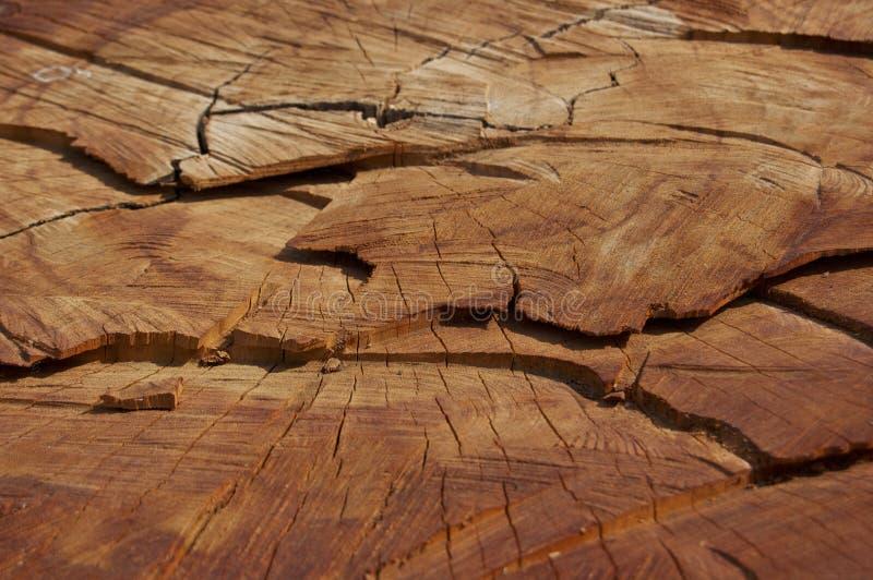 木纹理 库存照片