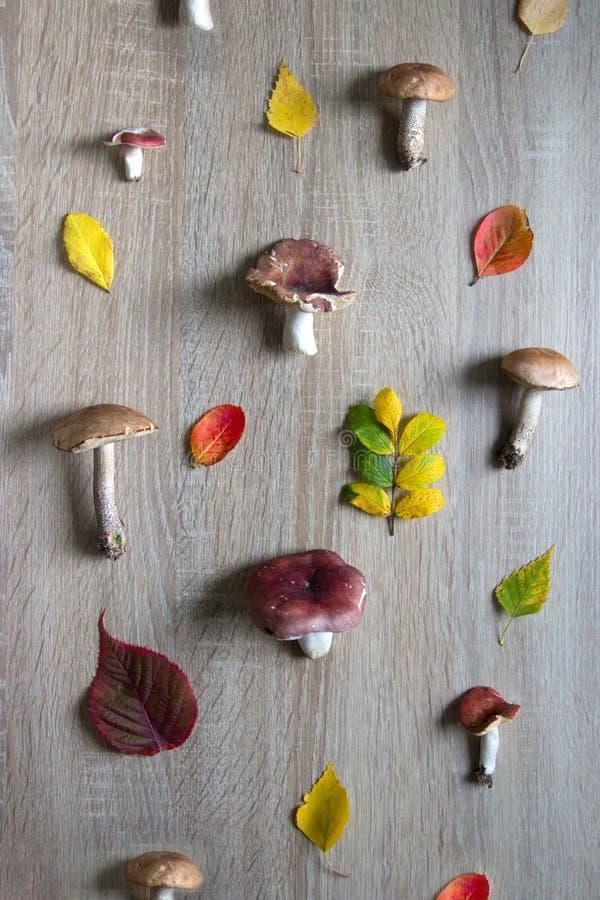 木背景是白色的对此秋天蘑菇和叶子 图库摄影