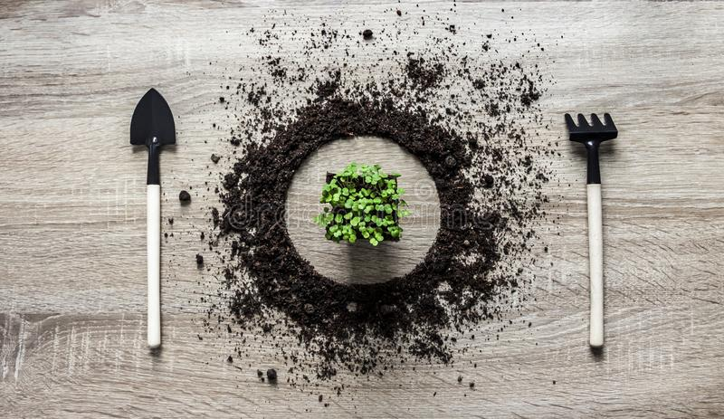 木背景概念地球堆了圈子盘匙子桨叉子种植花蔬菜沙拉弹簧的犁耙纹理水平 免版税库存照片