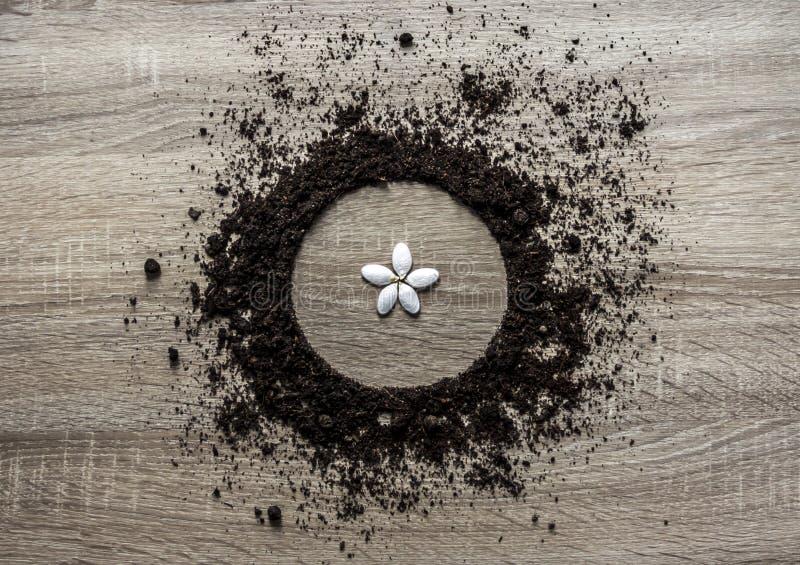 木背景概念地球堆了圈子盘纹理着陆中心种子,花水平瓣的春天 图库摄影