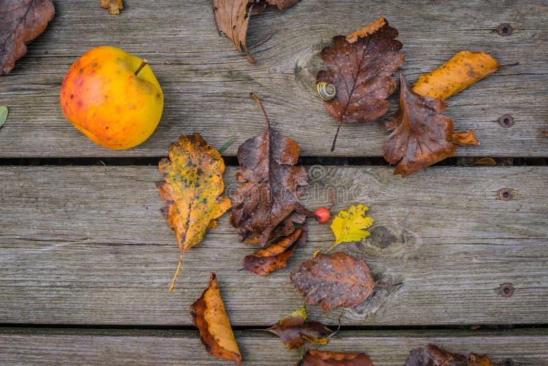 木背景用秋天苹果 库存图片