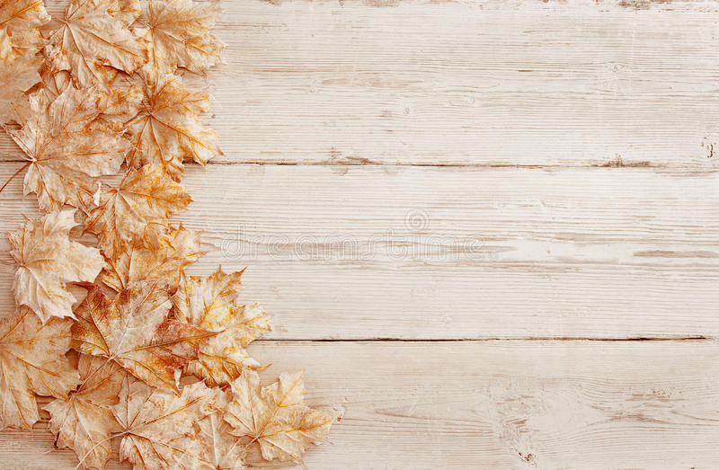 木背景白色叶子,木五谷纹理,板条叶子 免版税库存图片