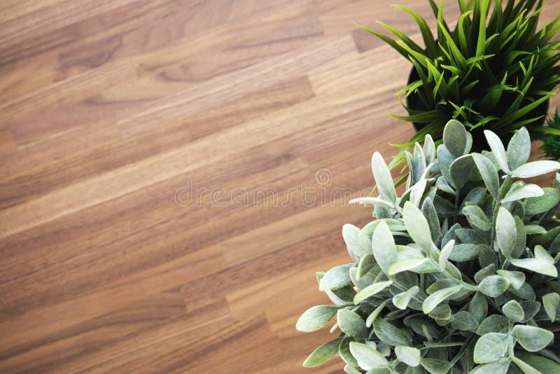 木背景的植物 库存图片