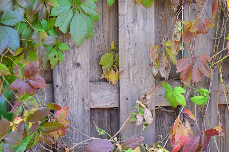 木背景,明亮的颜色 免版税库存照片
