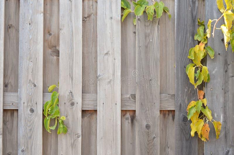 木背景,明亮的颜色 免版税图库摄影