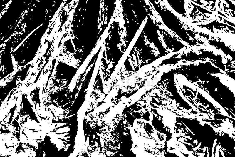 木脏的纹理 粗砺的木材黑白纹理 与根表面的树皮 皇族释放例证