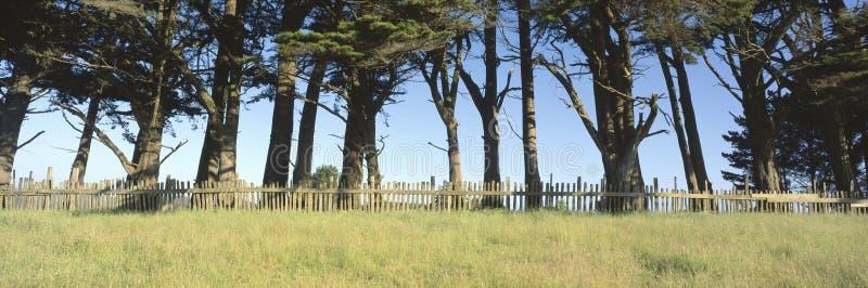 木范围的结构树 图库摄影
