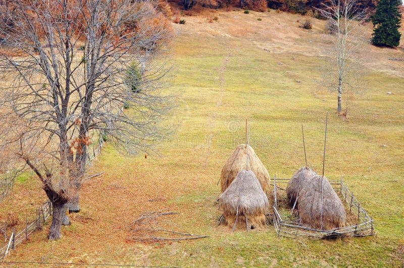 木范围的haycock 库存图片