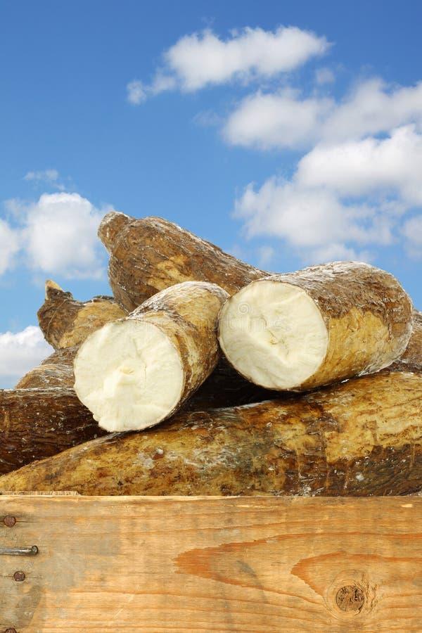 木薯根和有些片断 免版税库存照片