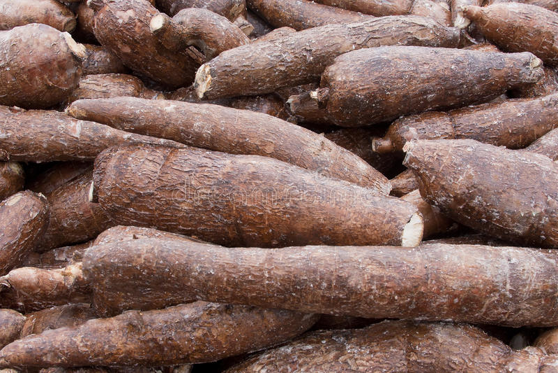 木薯根 库存照片