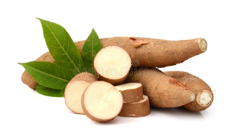 木薯 免版税库存图片