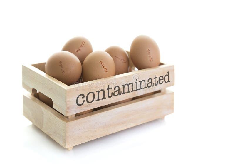 木蛋盒Fipronil充分沾染了鸡蛋 库存图片