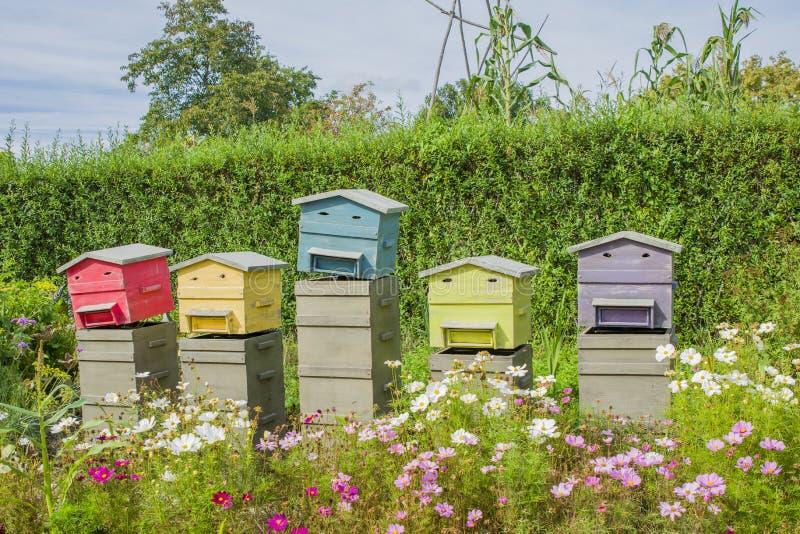 木蜂箱行蜂的 免版税库存照片